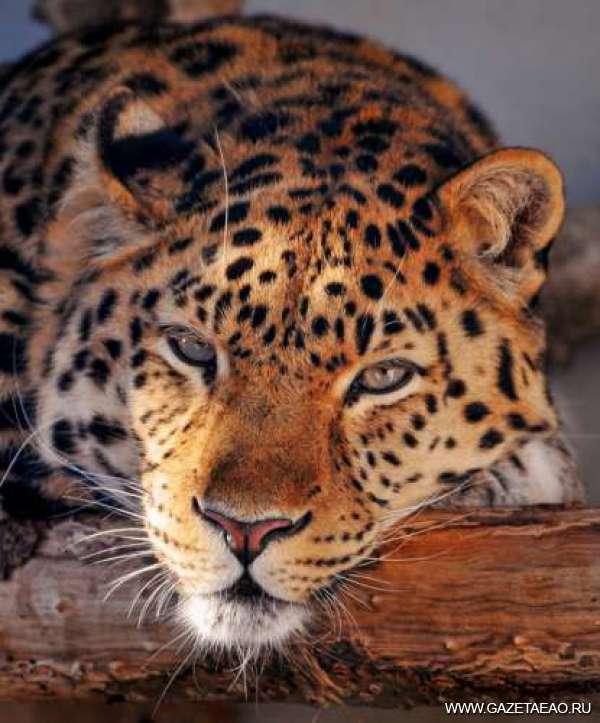 «Земля леопарда» — неприкосновенная
