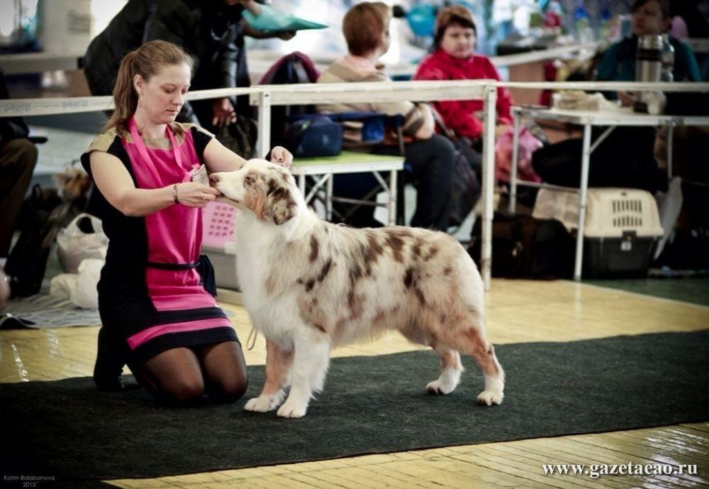 Отдых – работа с собаками