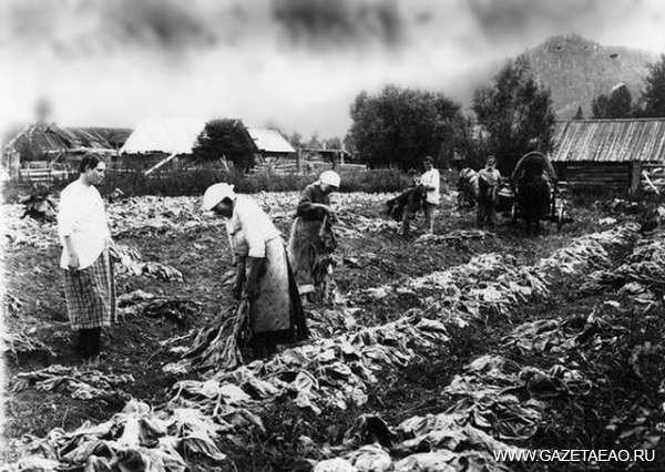 Сто лет тому назад - Крестьянский огород в 1916 году
