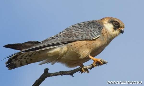 Летят перелетные птицы…