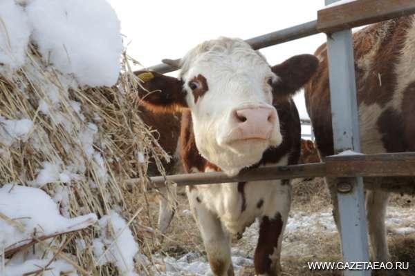 объявление о продаже коровы образец - фото 9