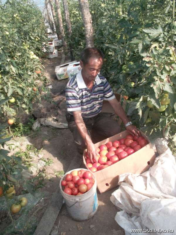 Урожай наш, урожай… - Китаец Ван - и бригадир, и агроном