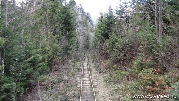 Лес ехал по рельсам и сплавлялся по реке