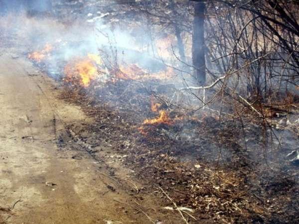 Люди в лес – пожар на волю