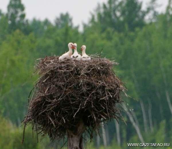 Аисты прилетели - Гнездо аиста. Р.Шпекк