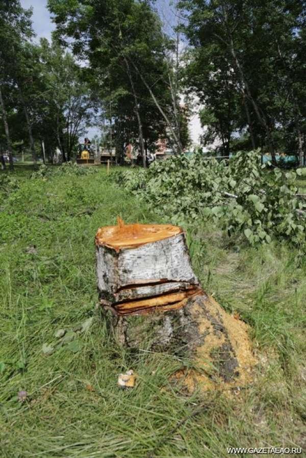 Срубили в городе дерево…