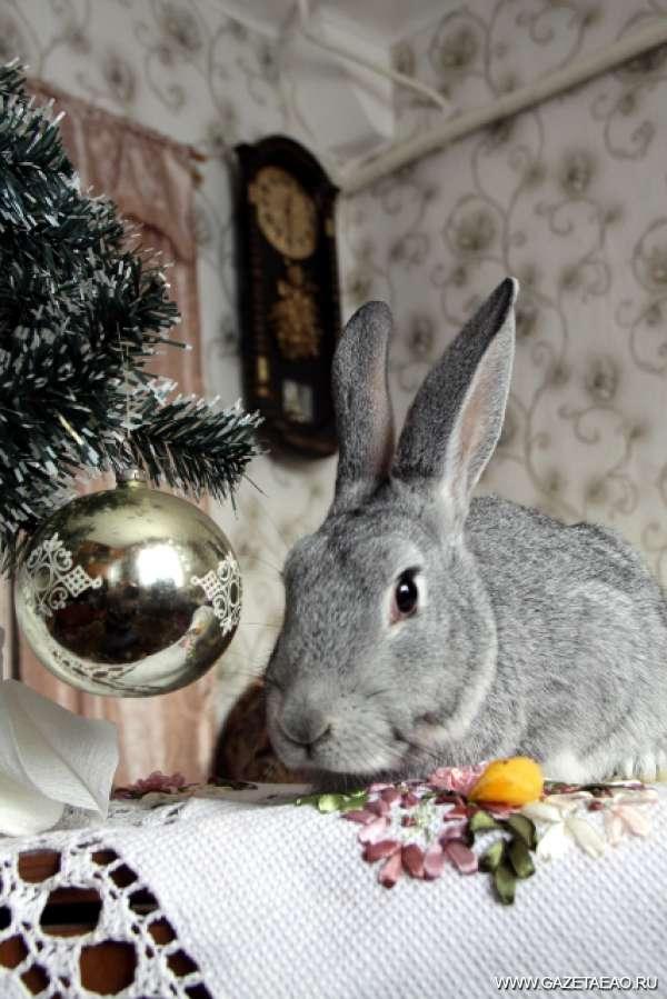 Елка для кролика