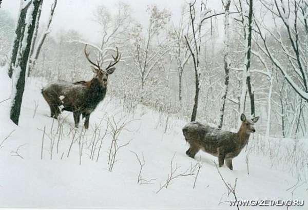Кто на мушке  у охотника…