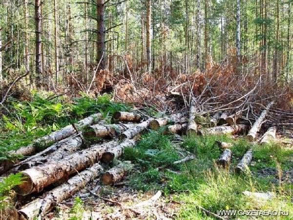 Кто лес защитит?