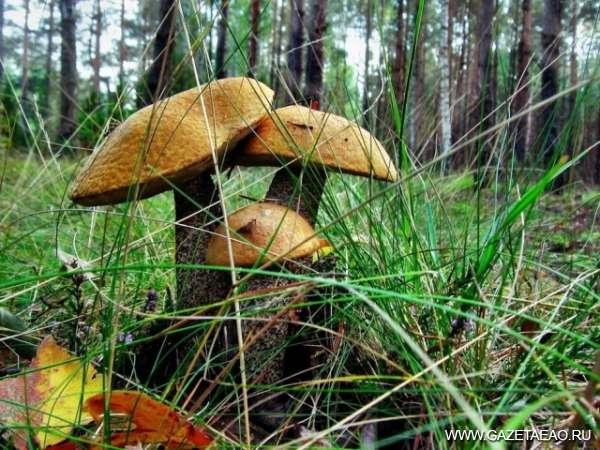 Первый гриб – как подарок