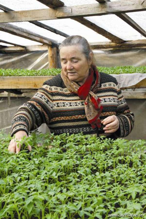 Овощ фермеру не в помощь - Глава крестьянско-фермерского хозяйства из Валдгейма Анна Катрушенко