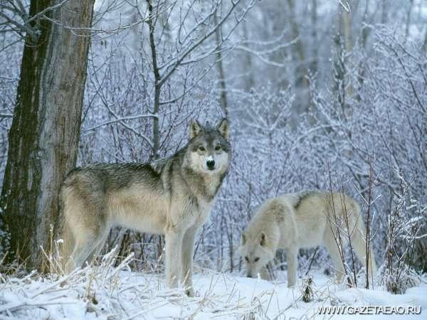 Кто у нас в лесу живет - Фото с сайта susanin.udm.ru