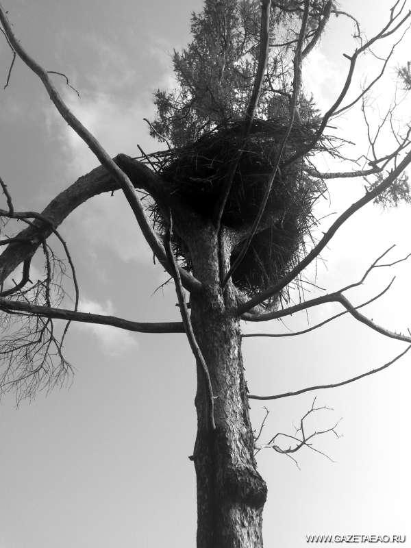 Природоохранная  забота «Багульника»