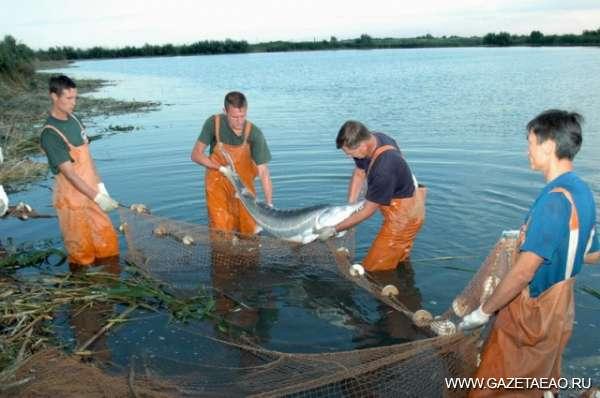 Вытащить бы рыбку из пруда