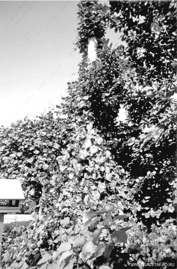 Когда цветут столбы