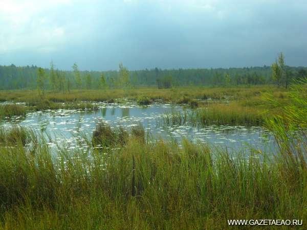Эти бесценные болота