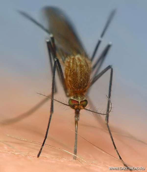 Где комар зимует