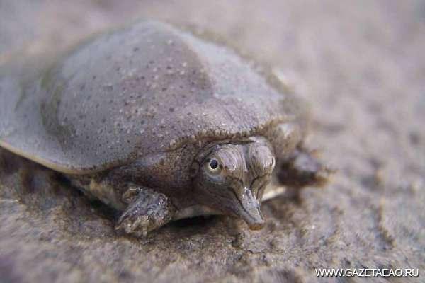 Черепаха в городе