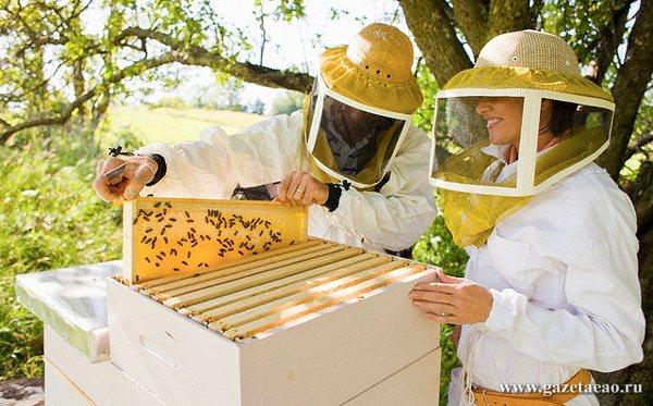 Кто с медом к нам?