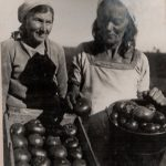 Уборка овощей в колхозе ИКОР