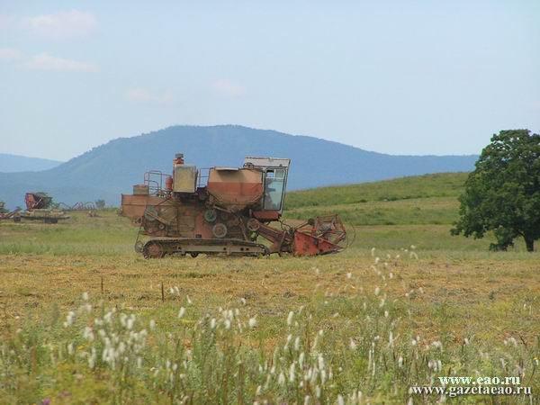 Убирают  овес и пшеницу