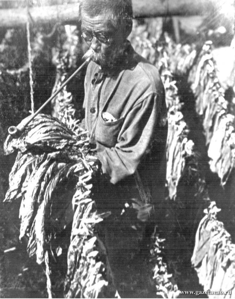 Биро-Биджан - Кореец, обрабатывающий табак