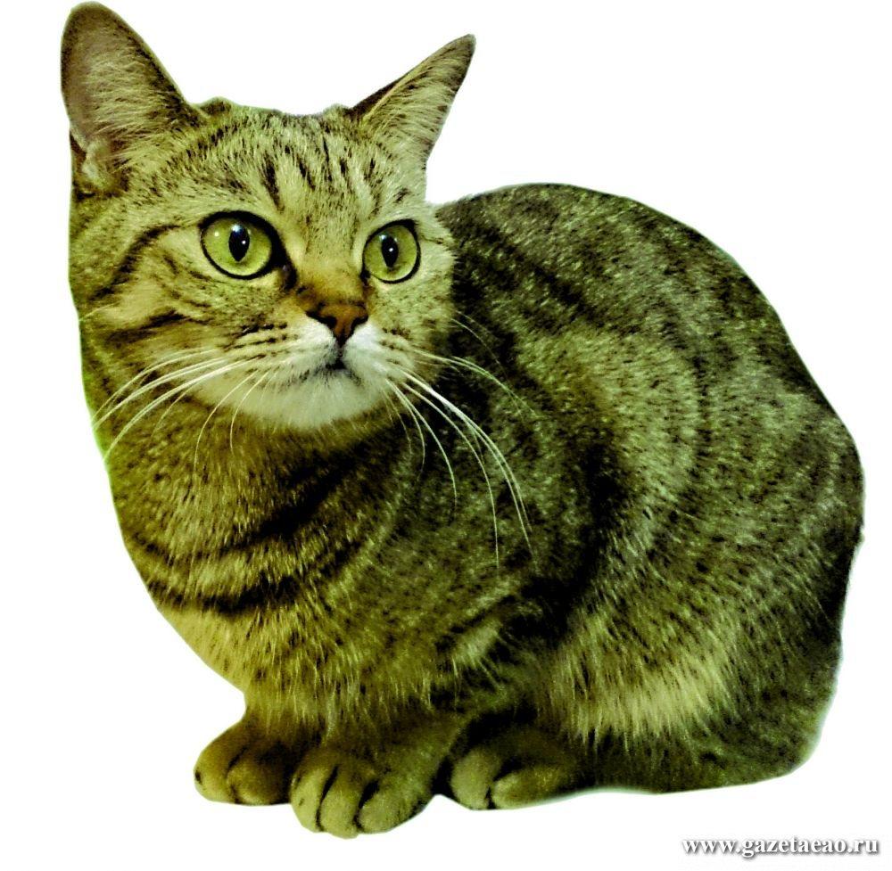 Кошка в полосочку