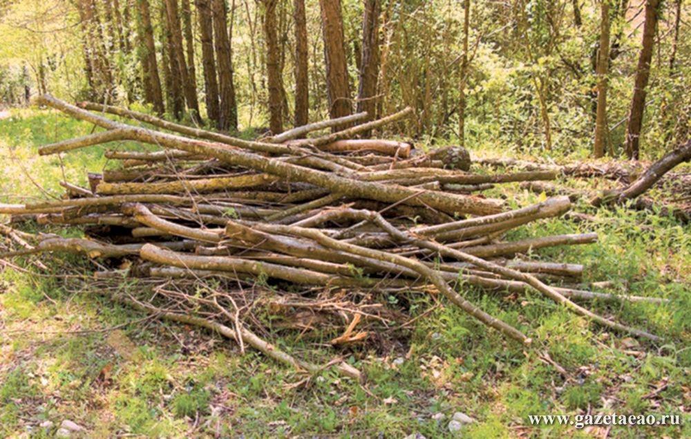Пробивается закон сквозь лесной валежник, или Как не угодить под суд за сбор… мусора в чаще