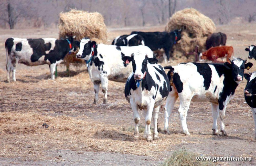 Крестьянско-фермерский вопрос