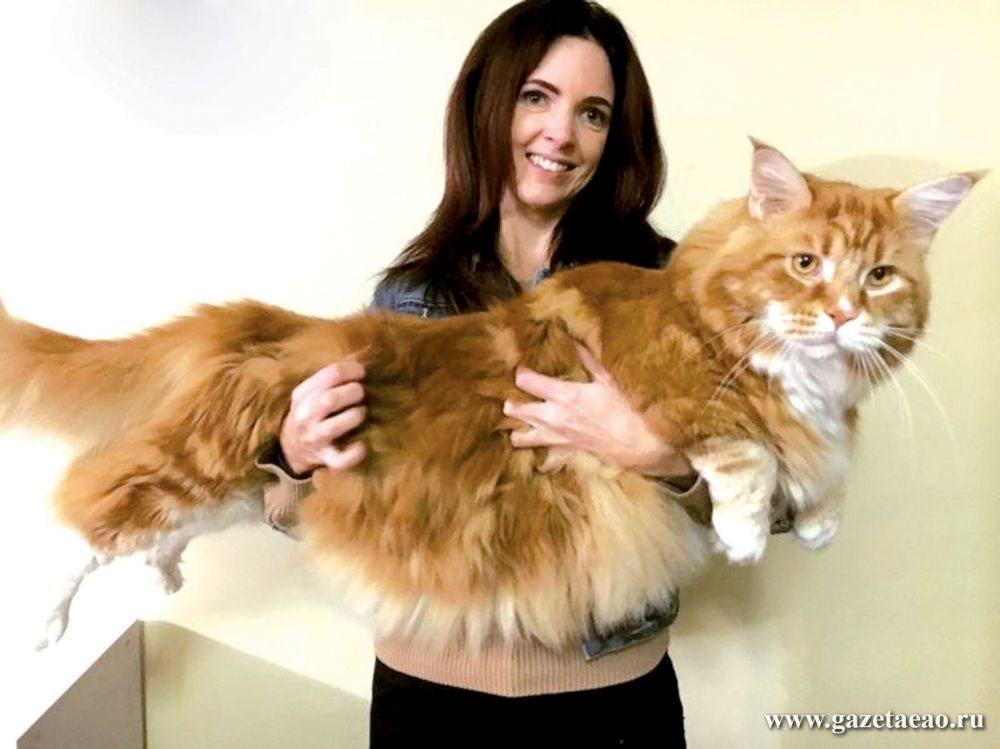 Сказочный кот без сапог