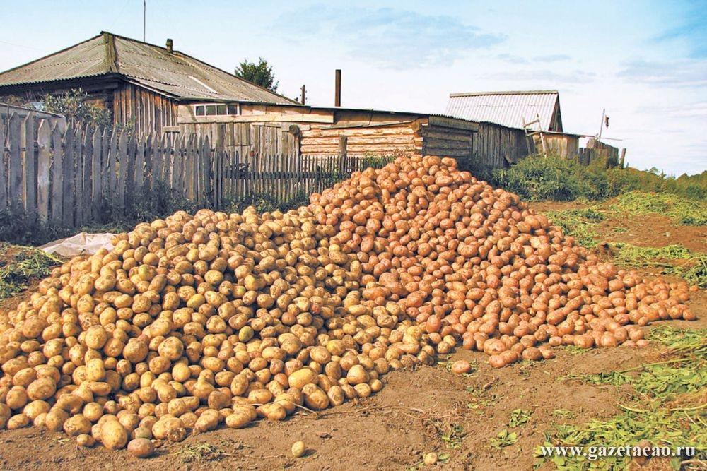 Картошка у нас «не той системы»