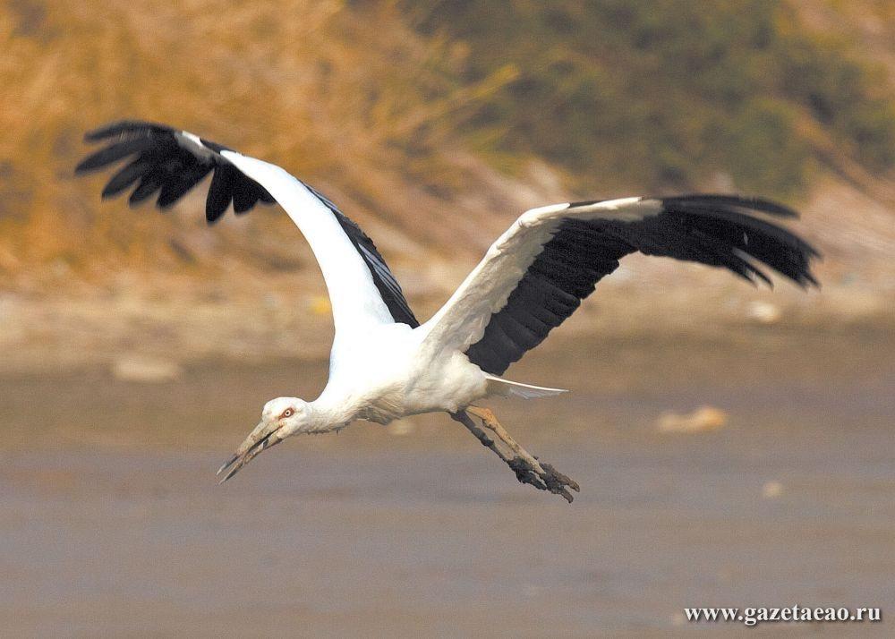 Белый аист летит…