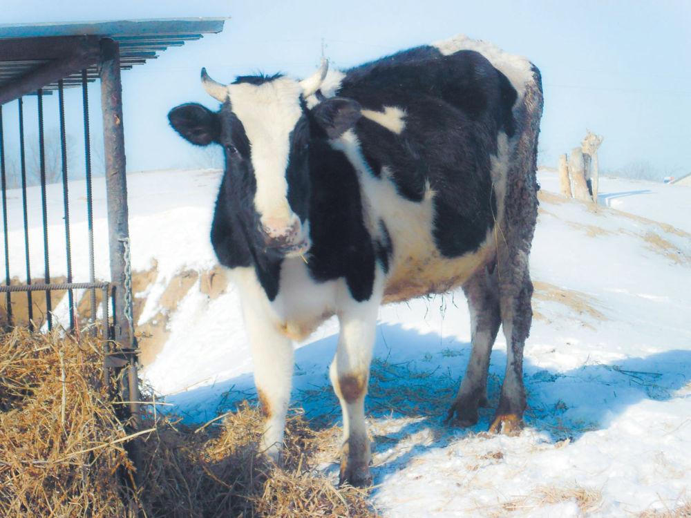 Скота больше — земля дешевле?