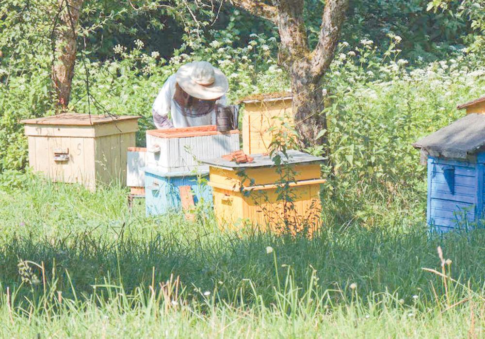 Пчёлка денежку несёт