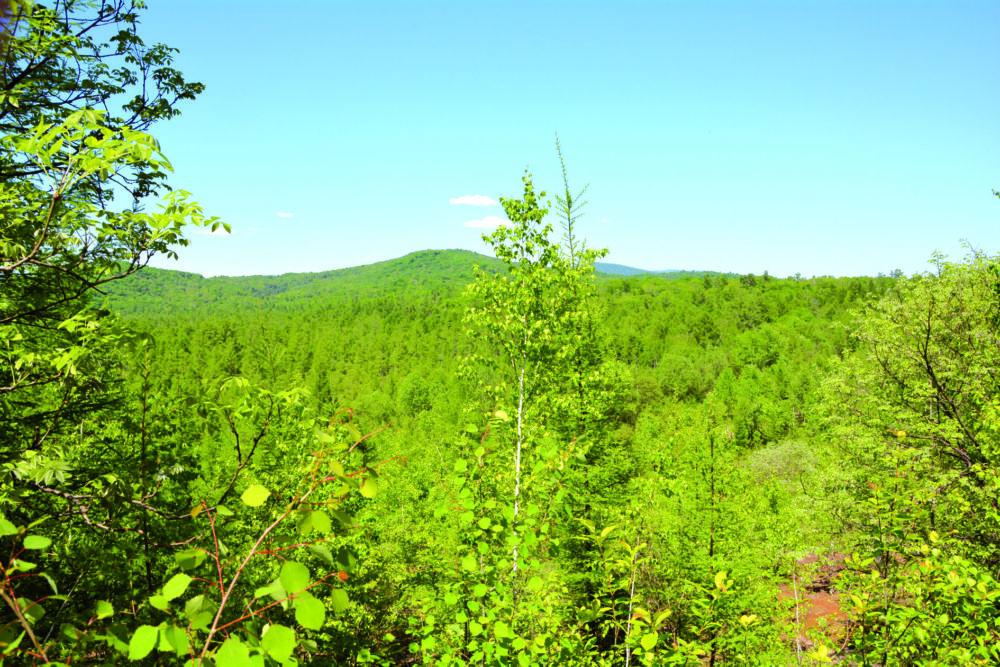 Лесу поставили диагноз - Под угрозой Урал, Сибирь и Дальний Восток - главные лесные ресурсы страны