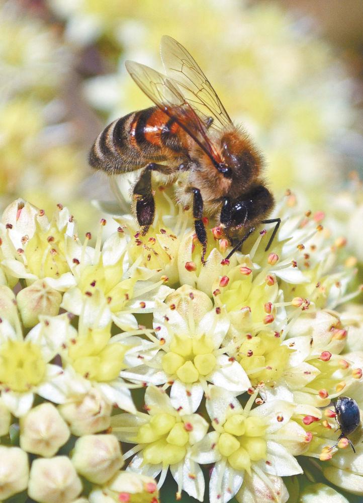 Ложка дёгтя в меду