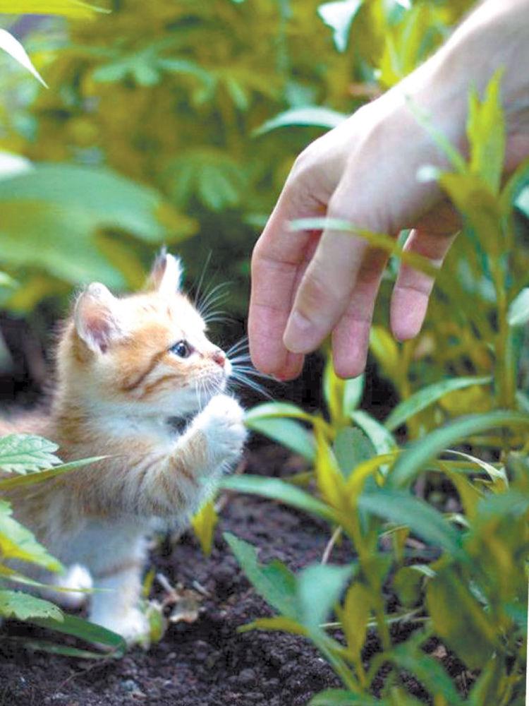 Котёнок тоже хочет жить!
