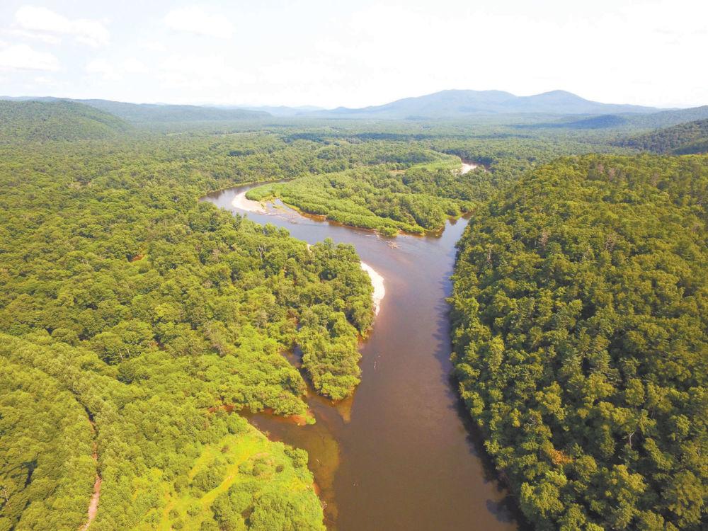 Как там живут, где лес не рубят