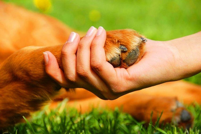 Готовятся новые законы ЕАО об обращении с животными