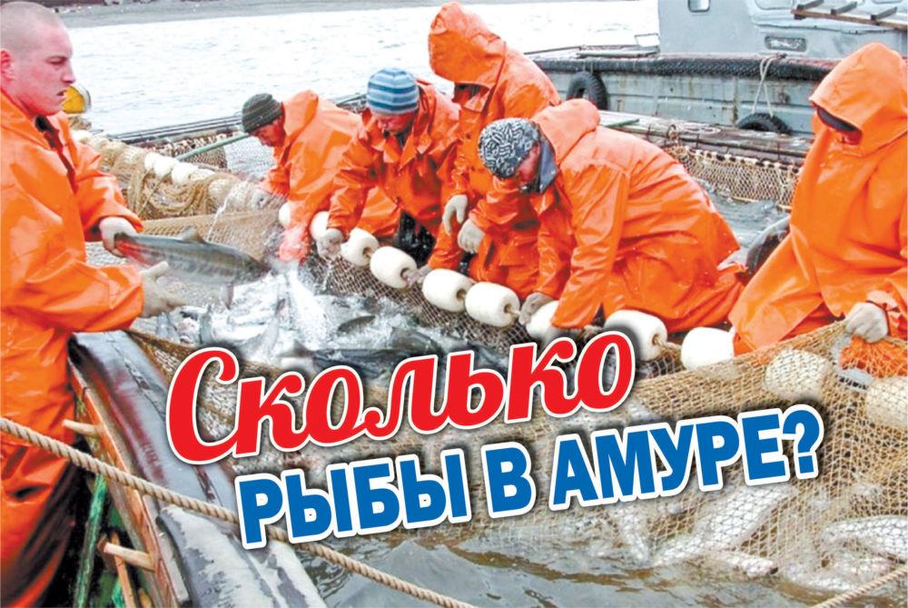 Сколько рыбы в Амуре?